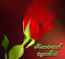 A rose to travel in your heart by Annabellerockz