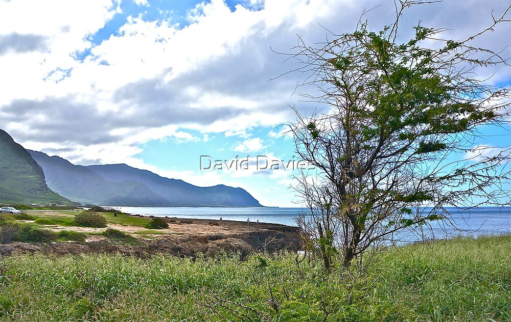 Kepuhi Point from Kaena State Park. Oh, and a Tree! by David Davies
