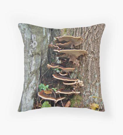 Turkey Tail Bracket Fungus - Basidiomycota Throw Pillow