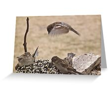 Sparrow Up Above Greeting Card