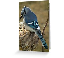 Blue Jay in Contemplative Mood Greeting Card