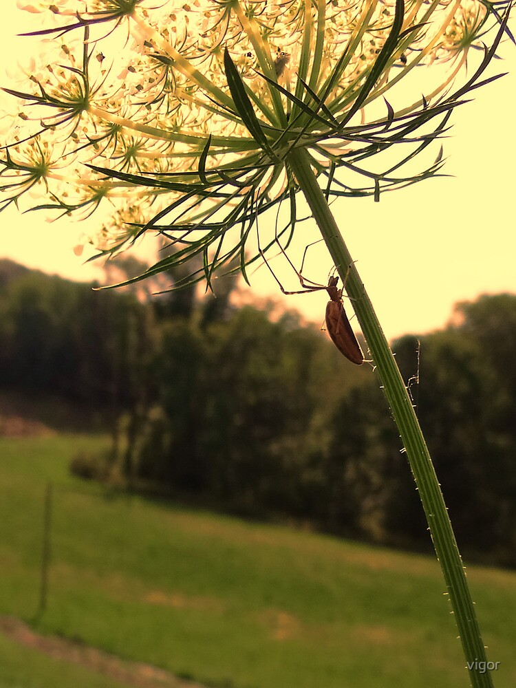 Itsy bitsy spider on flower by vigor