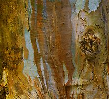 Bark Painting #6 by Bette Devine