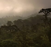 """""""Cloud Forest Sunset"""" -- Costa Rica by Matt Tilghman"""