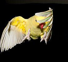In flight. by pinkdevil