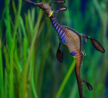 Dragon Seahorse by Diego  Re