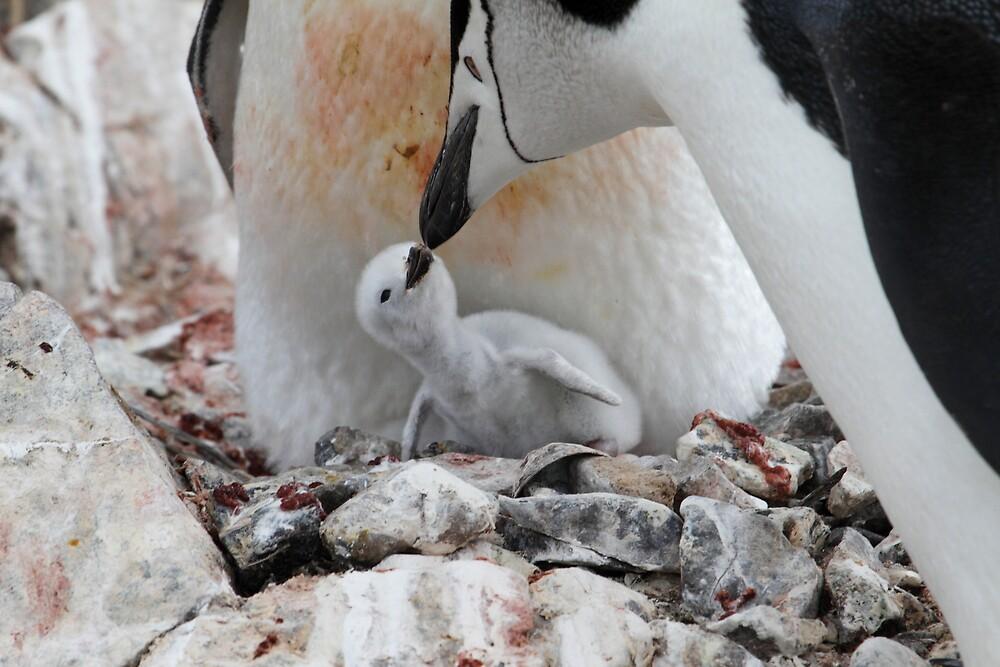 Kiss of the beak by DianaC