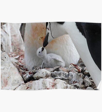 Kiss of the beak Poster