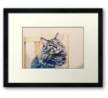 Soft kitty Framed Print
