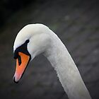 Lakes: swan by Jonesyinc