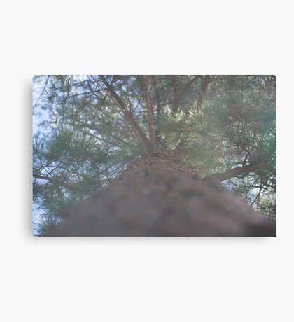 The pine scented suburb Canvas Print