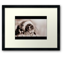 keeper Framed Print