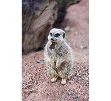 Meerkat Photographic Print