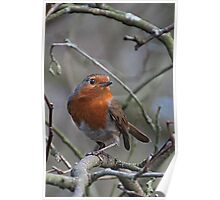 The Robin . Poster