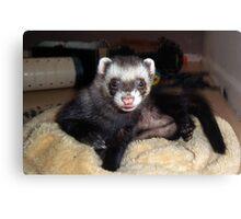 Cuddly ferret Canvas Print