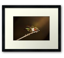 hummer in the spotlight Framed Print