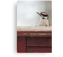 Hairy Woodpecker ~ Canvas Print
