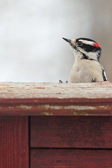 Hairy Woodpecker ~ by Renee Blake