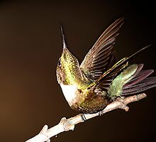"HUMMINGBIRD I""M IN THE MONEY by Randy & Kay Branham"