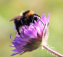 Bumble Bee by Fairoak