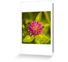 Pink Punch Greeting Card