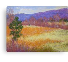Dry grass in February Canvas Print