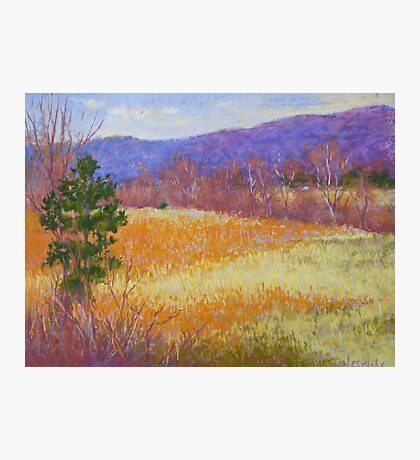 Dry grass in February Photographic Print