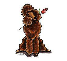 Chocolate Poodle Sweetheart Photographic Print