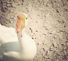 Quack!  by Loretta Marvin