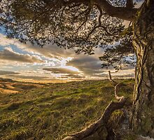 Tree with a View by Phil Tinkler