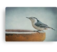 White-Breasted Nuthatch ~ Canvas Print