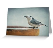 White-Breasted Nuthatch ~ Greeting Card