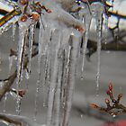 Icy Morning America by laura01888