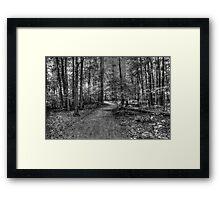 Forest 2 Framed Print