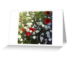 Poppies and Daisies on Red Greeting Card