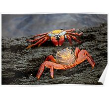 Red Rock Crabs Poster
