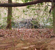 Beaver lodge by nealbarnett