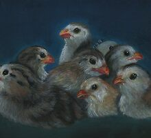 New Generation Guinea Keets by Robin Gorton