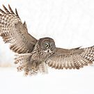 Wing span by jamesmcdonald