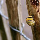 Yellow Snail by Hannah Welbourn