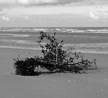 Blown On The Beach by Stan Owen