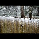 Wooden Fence Covered With Snow by  Sophie Smith