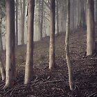 Dark forest by ozzzywoman