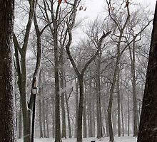 Snowy morning in the park by Alberto  DeJesus