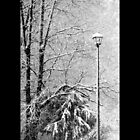 Street Light In Winter  by © Sophie W. Smith