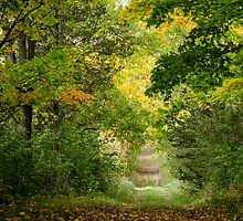 A Fall Journey by Shane Laing