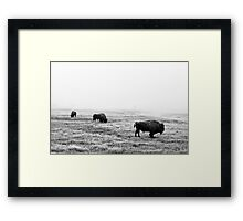Frosty Bison - Yellowstone National Park Framed Print