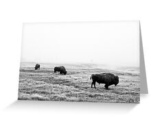 Frosty Bison - Yellowstone National Park Greeting Card