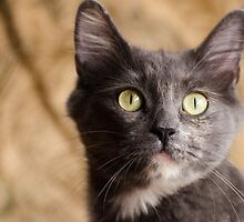 Eyes Of The Cat by Shane Laing