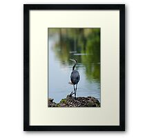 Great Blue Heron On Fallen Tree Framed Print
